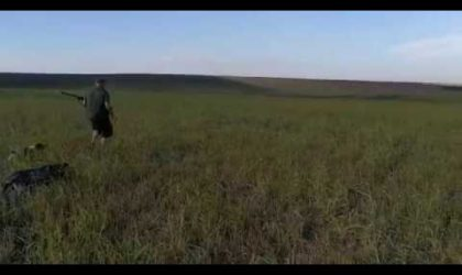 Wild Hunting Quails with Dogs 2