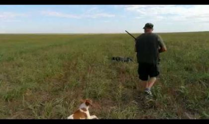 Wild Hunting Quails with Dogs 1